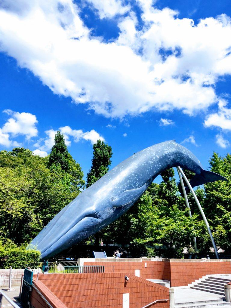国立科学博物館横のシロナガスクジラ。