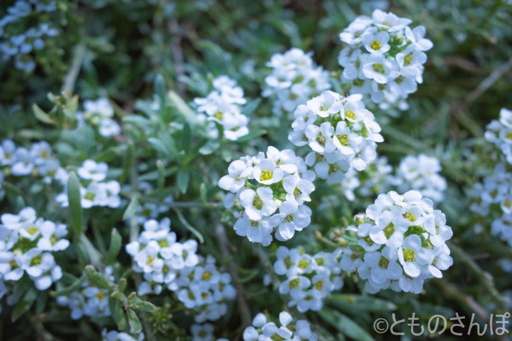 名称不明の花。