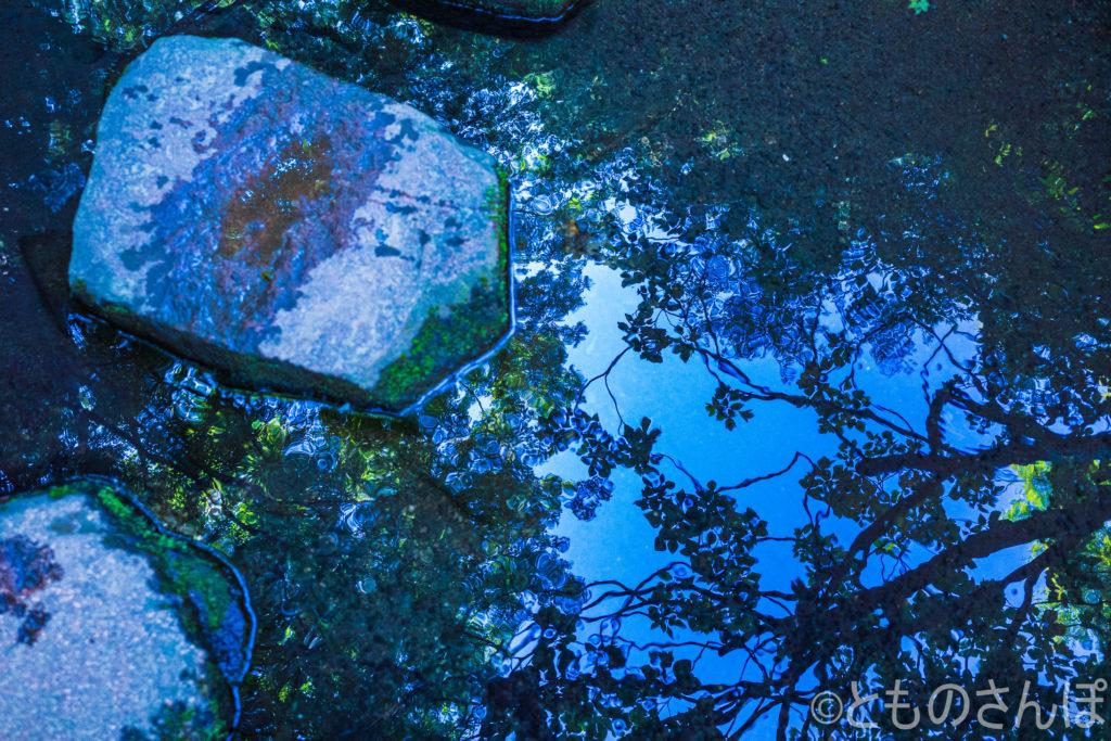 池に反射する空。