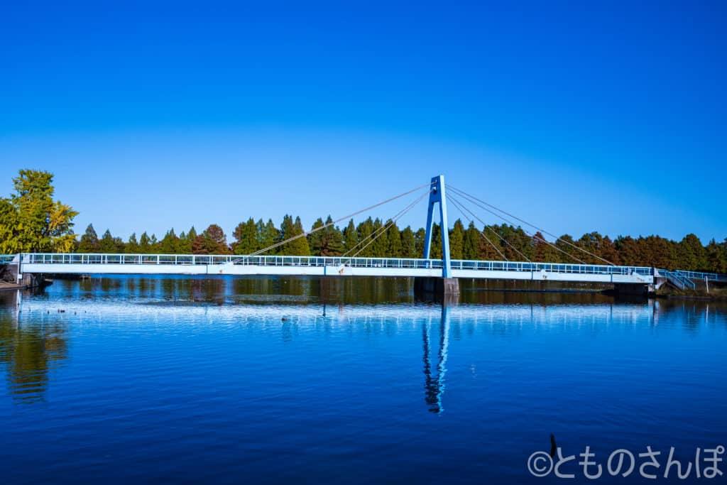 都立水元公園、水元大橋。
