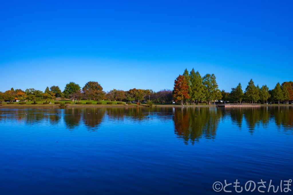 水元公園から見えるみさと公園。