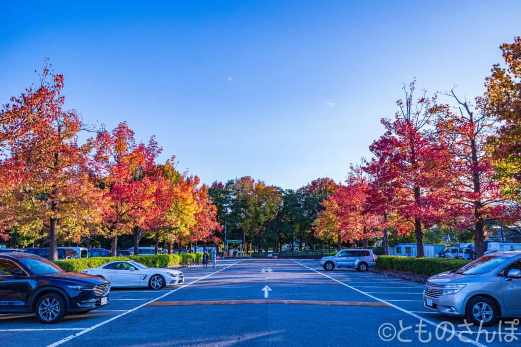 水元公園駐車場。