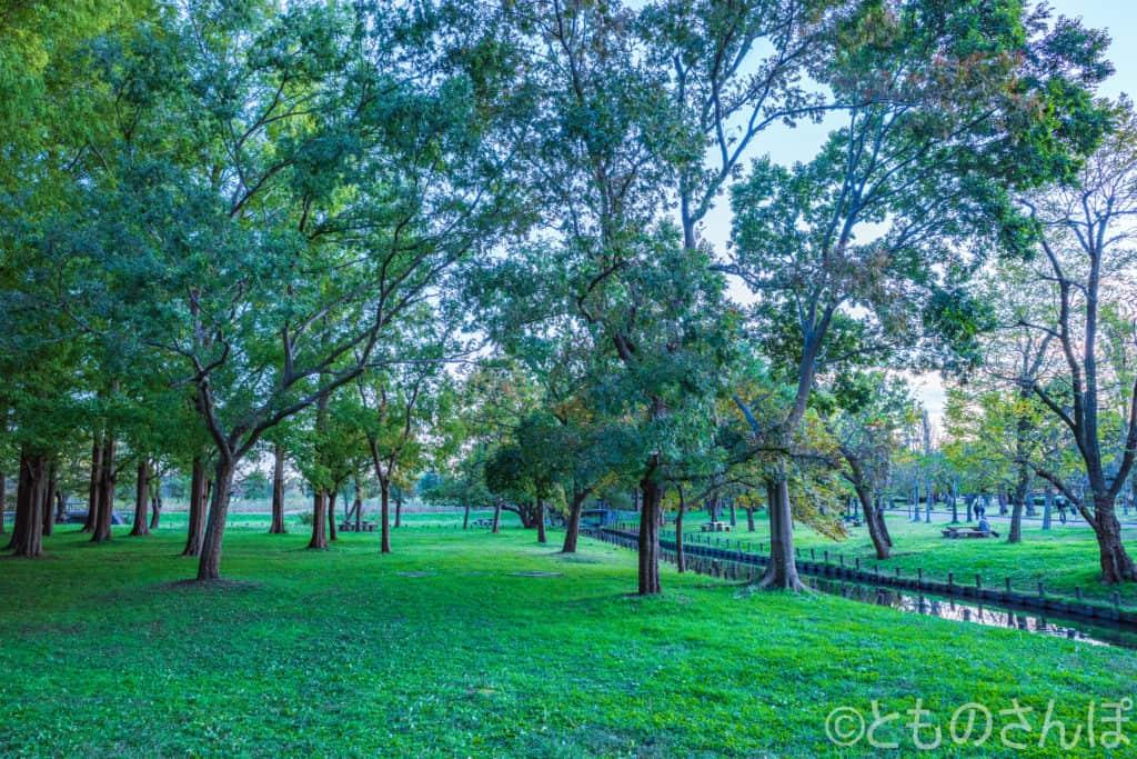 水元公園の木々。