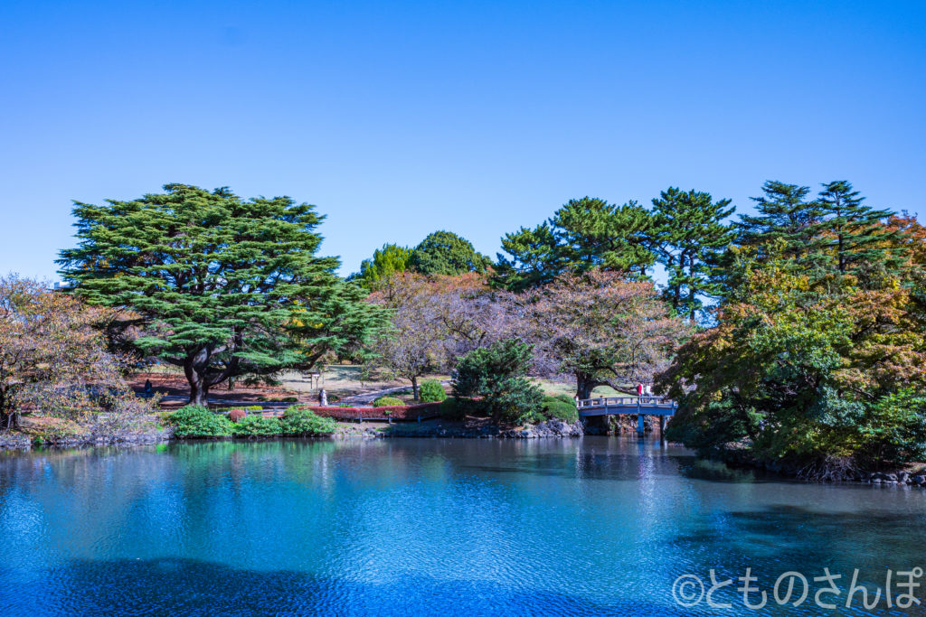 新宿御苑日本庭園。