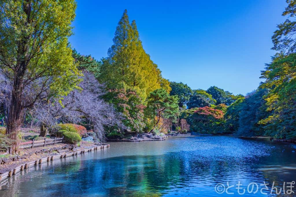 新宿御苑の池。