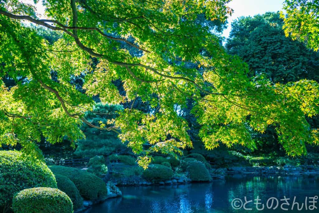 新宿御苑、木もれ陽。