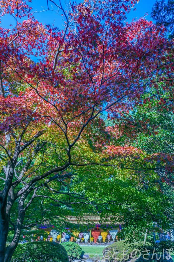 新宿御苑、紅葉しかけた木々。