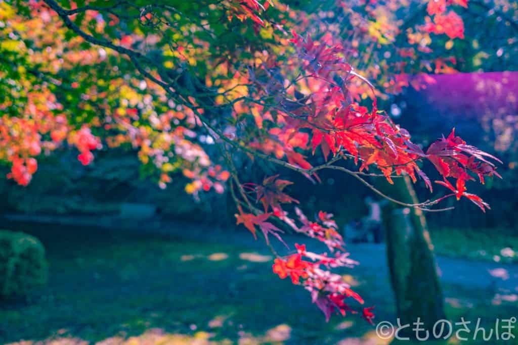 新宿御苑、紅葉。