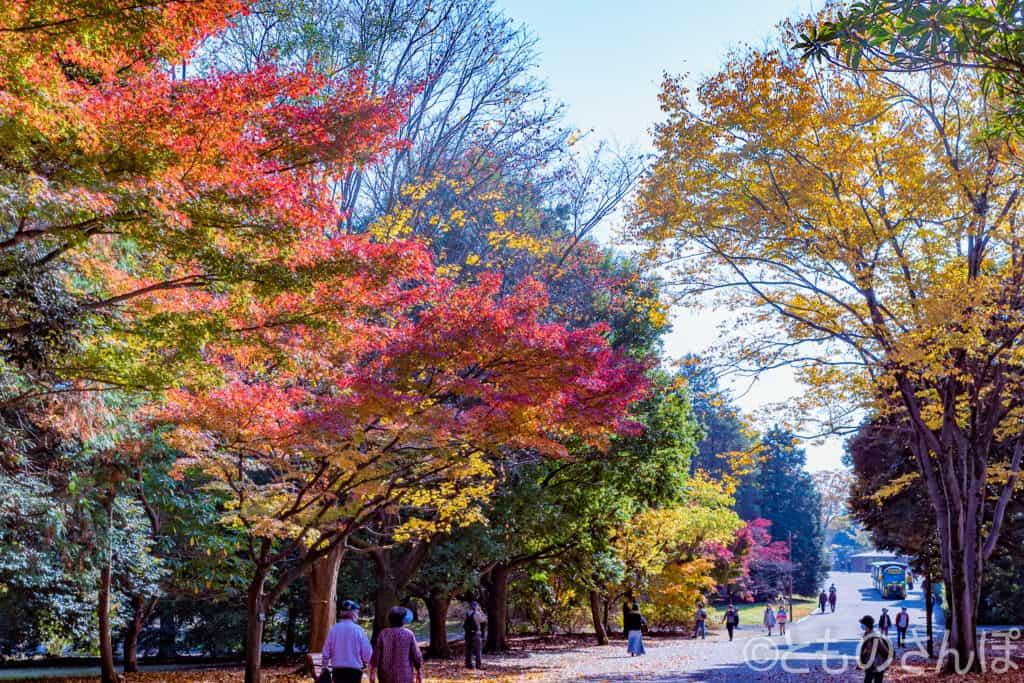 国営昭和記念公園の紅葉。