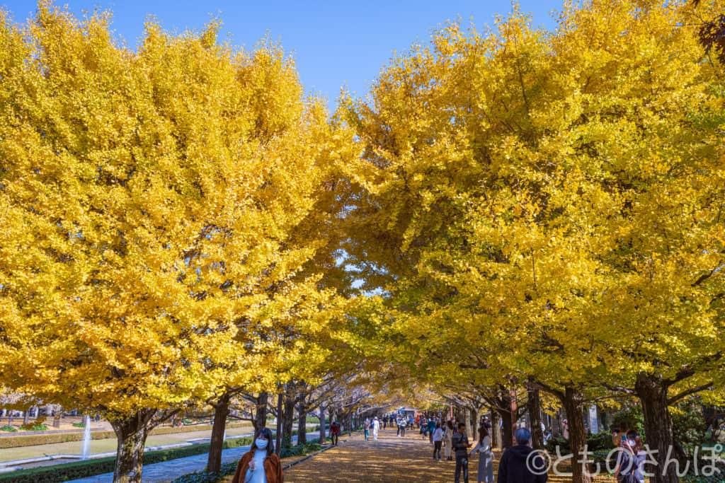 黄葉の並木道。