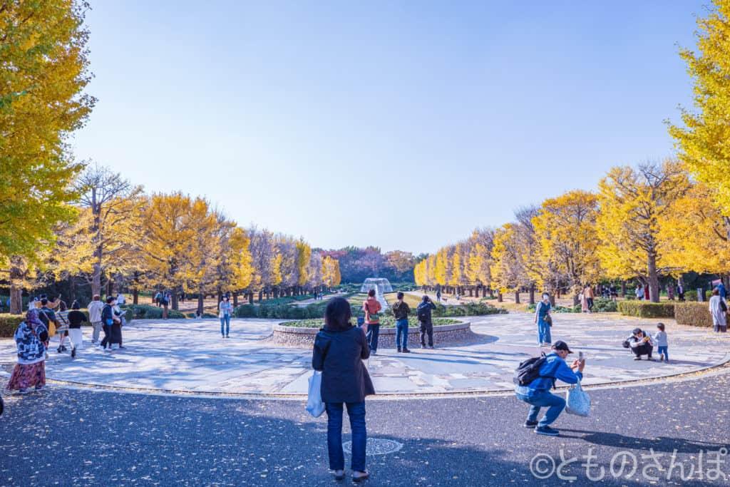 国営昭和記念公園の黄葉と観光客。