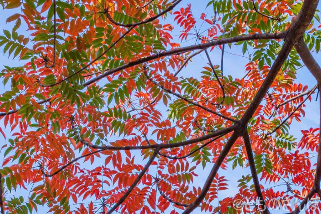 浜離宮恩賜庭園、紅葉した木。