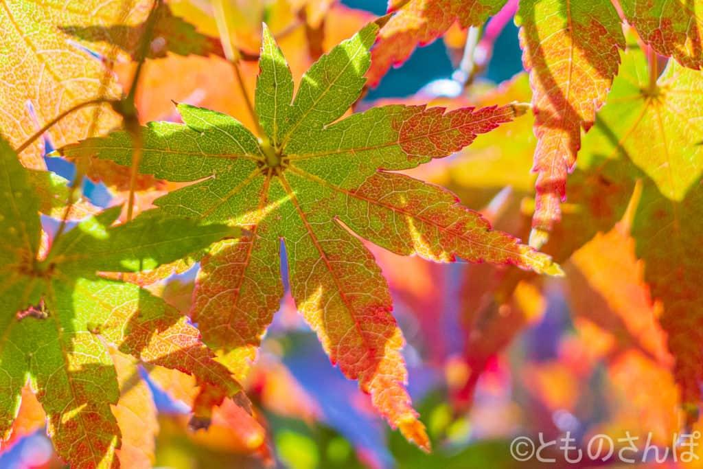 浜離宮恩賜庭園の紅葉。