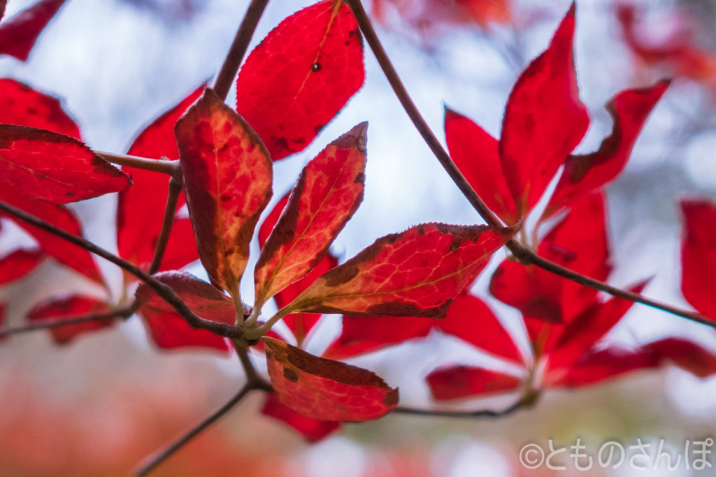 六義園、樹木の赤い葉。