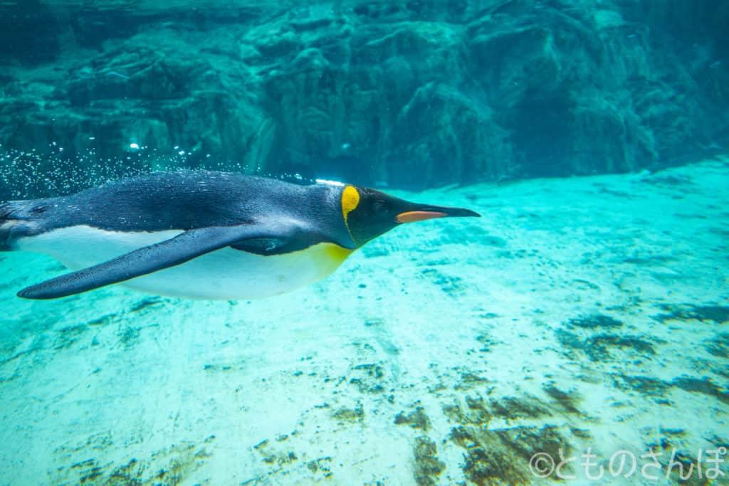 葛西臨海水族園のペンギン、水中の様子。