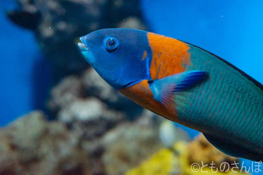 葛西臨海水族園、水槽の魚。