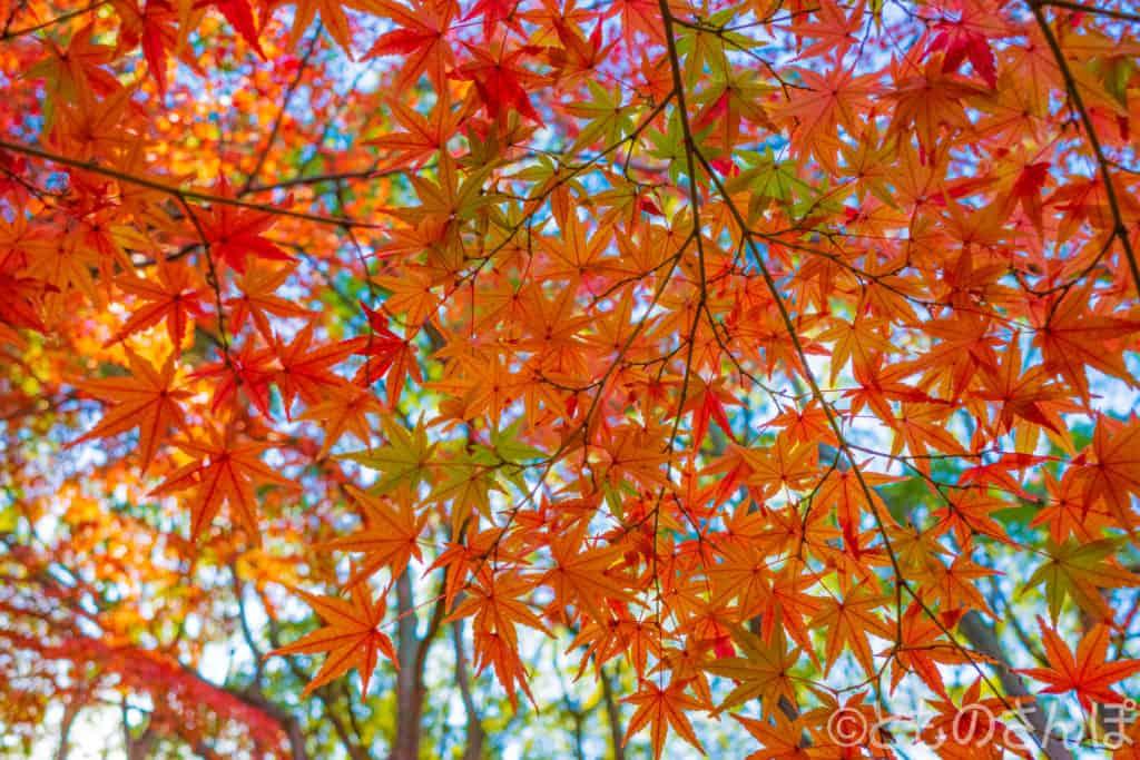 代々木公園の紅葉。