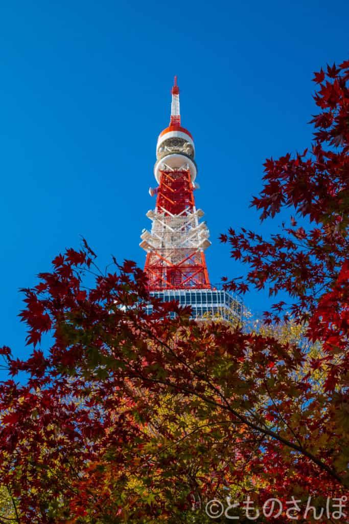 芝公園から見る東京タワー。