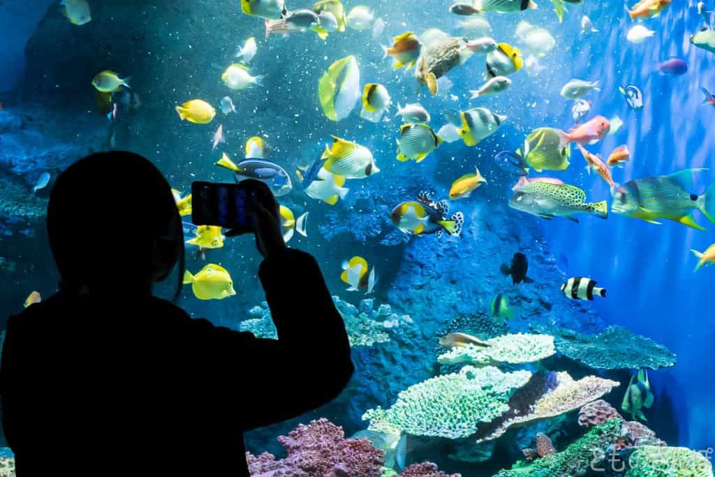 しながわ水族館、「いきものトーク」で水槽の魚に餌付けをしている様子。