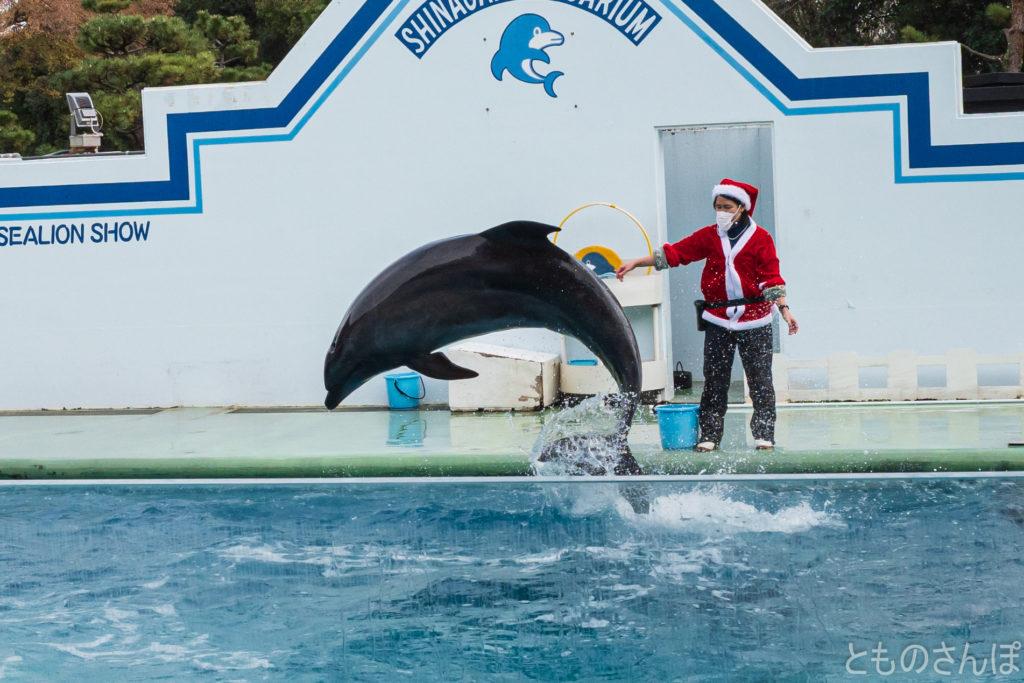 しながわ水族館のイルカショー。イルカのジャンプ。