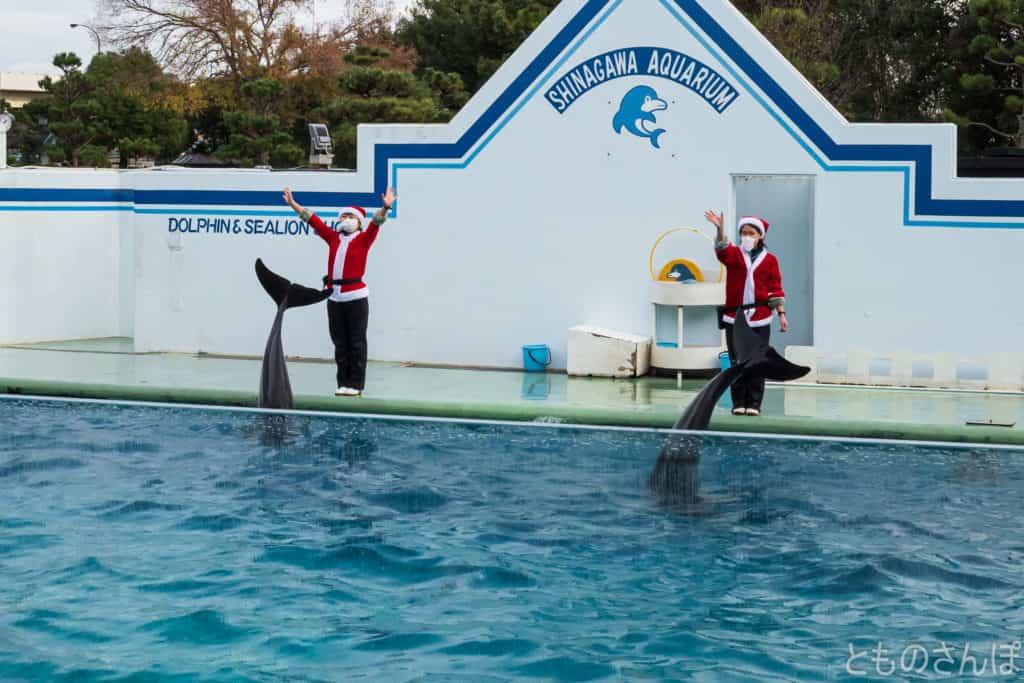 しながわ水族館のイルカショー。イルカのお別れの挨拶。
