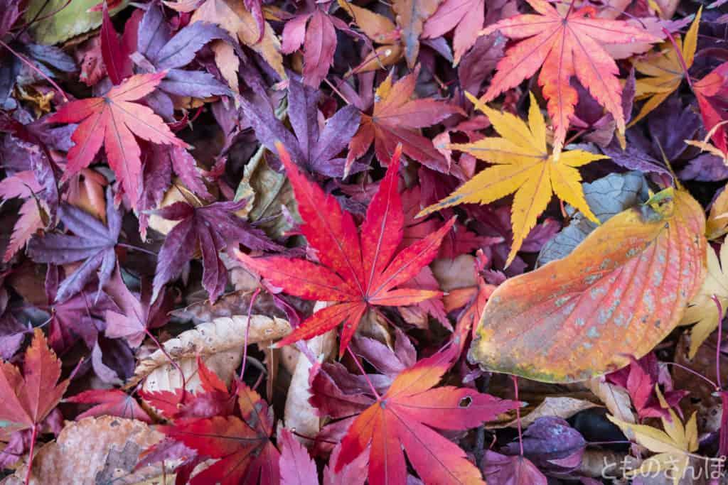 飛鳥山公園の落ち葉。