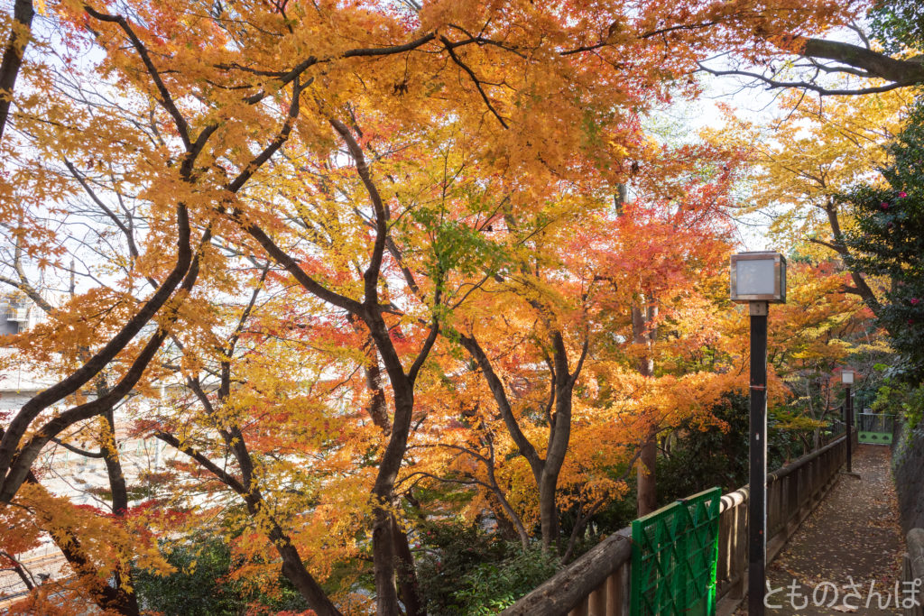 飛鳥山公園遊歩道。