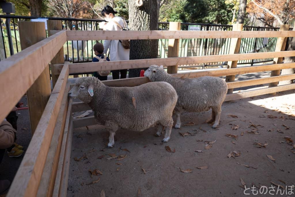 足立区生物園の羊。