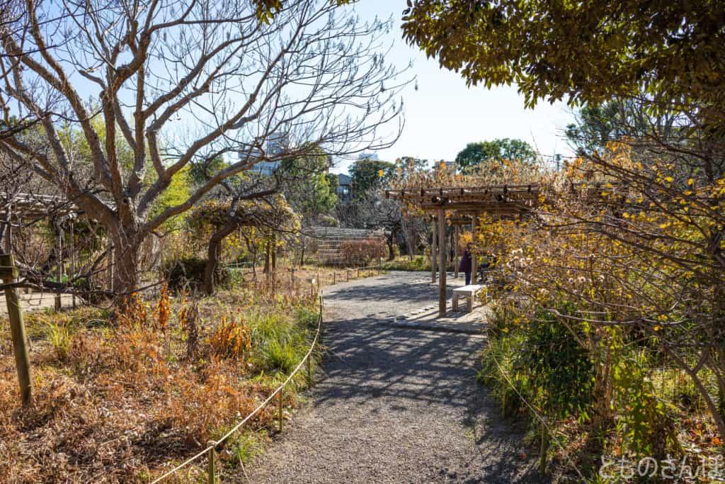 向島百花園、冬の園内の様子。