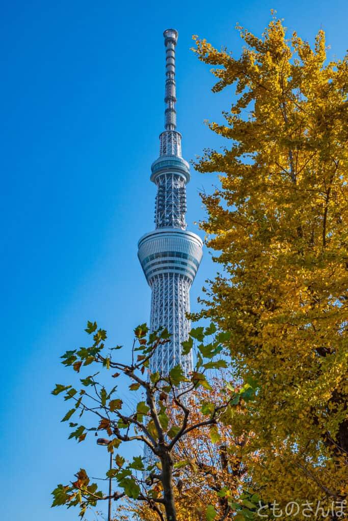 言問橋から撮影した東京スカイツリー。
