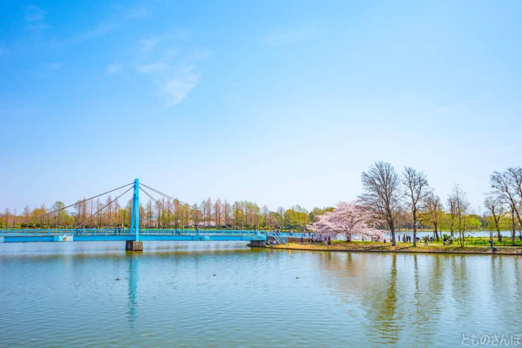 水元公園内、水元大橋と桜。
